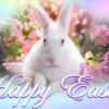 Easter.Image.Bunny resized 236 x 506